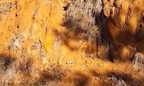 tanah podsolik