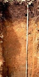 tanah andosol