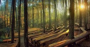 hutan wisata