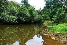 hutan rawa air tawar