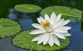 tumbuhan hidrofit