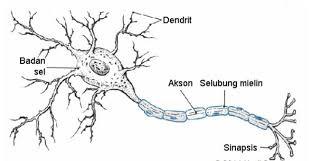 struktur jaringan saraf