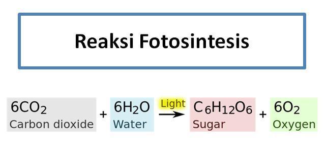 rumus fotosintesis