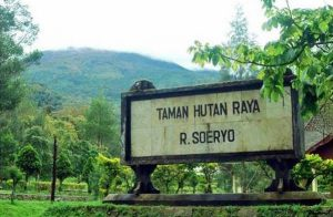 Taman Hutan Raya R. Suryo