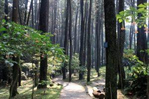 Taman Hutan Raya Pancoran Mas