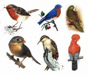 kelompok Aves
