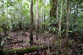 Hutan Kerangas