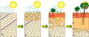tahapan pembentuk lapisan tanah