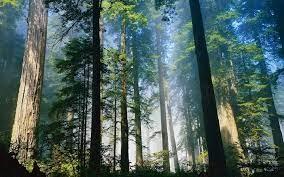 Kenali 5 Jenis Hutan di Indonesia : Okezone Nasional