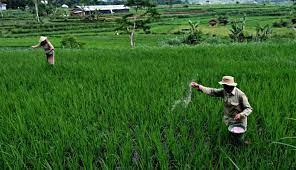 Investasi di Sektor Pertanian Masih Perlu Ditingkatkan
