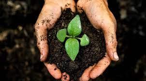 Tabloid Sahabat Petani | Tanah Subur dan Sehat