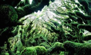 Hutan Goblin-New Zealand