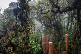 Hutan Mossy- Malaysia