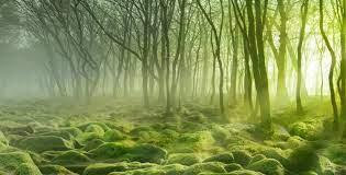 Hutan Moss Swamp-Romania