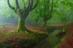 Hutan Otzareta-Spanyol